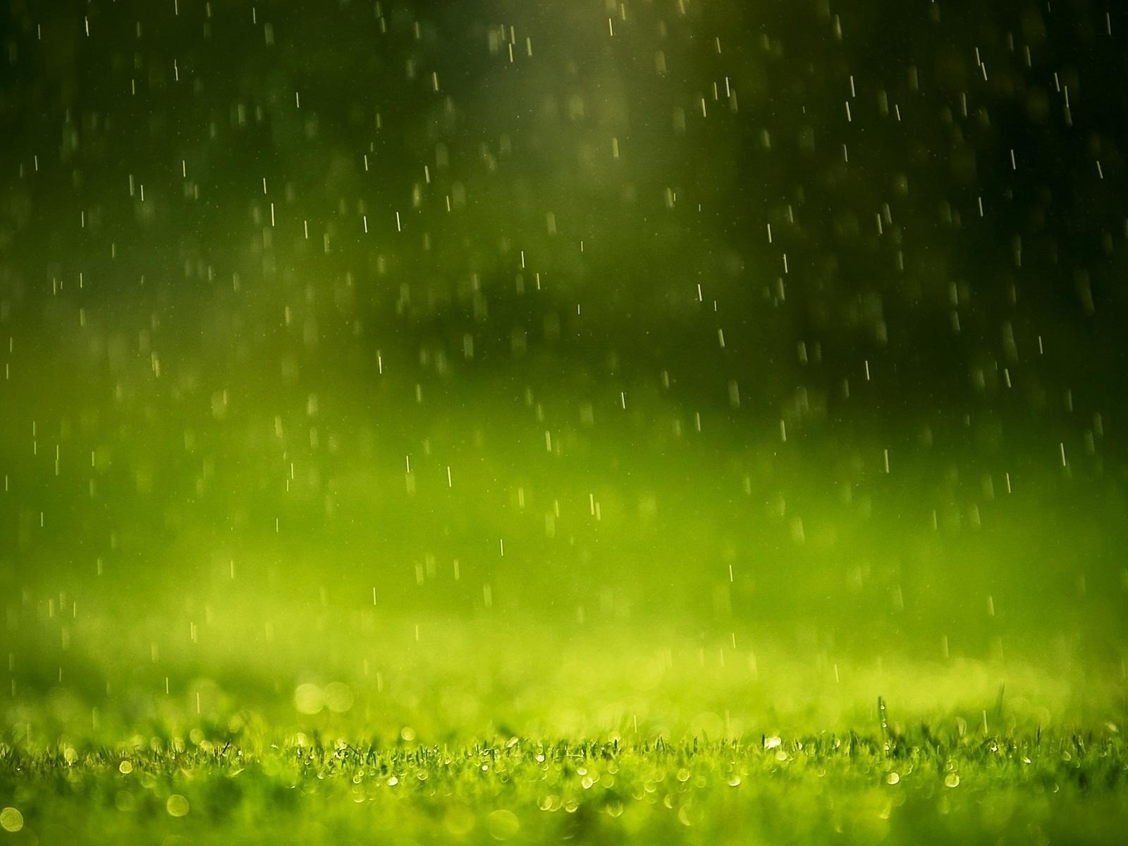 Raining On Grass Green Lights Macro Photography Hd Wallpaper