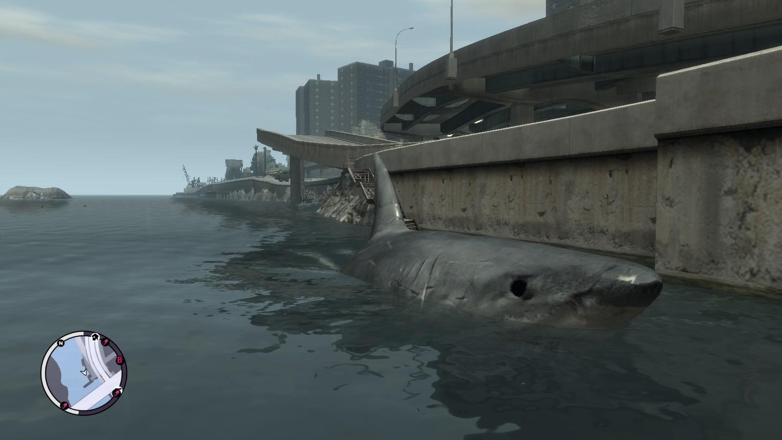 jmoorfoot4s blog megalodon shark release