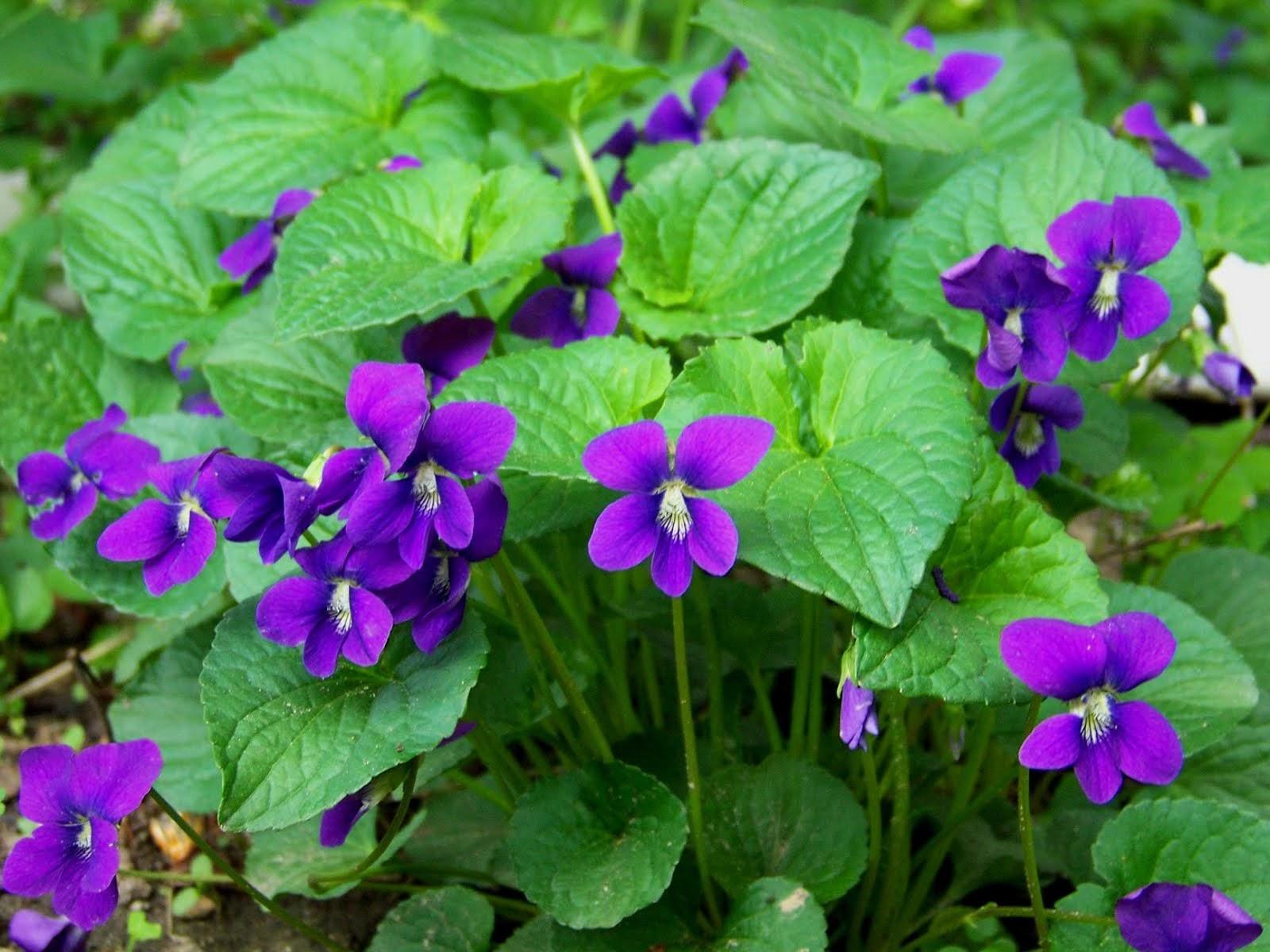 V Is For Violet Intelliblog