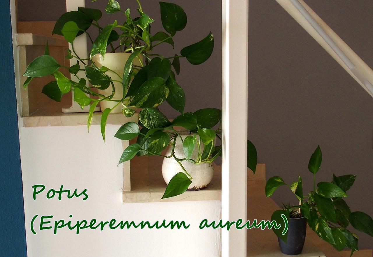 Equilibrio feng shui necesitas mejorar tu calidad de vida for Feng shui plantas dentro del hogar