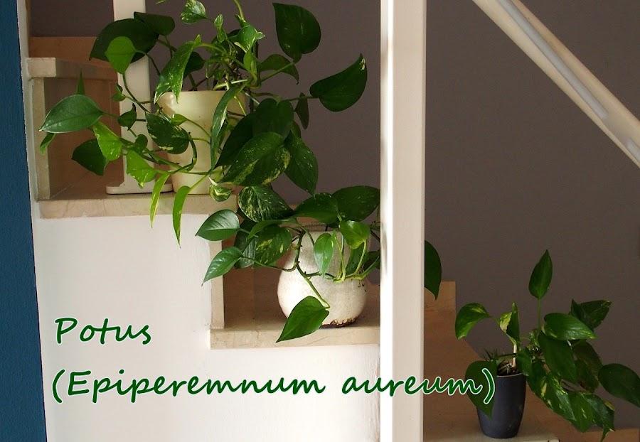 Las plantas además de decorar depuran el ambiente