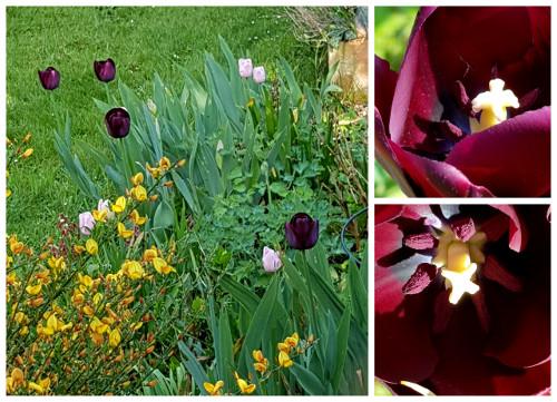 Nunu S Garn Und Stofflabor Tulpe Im Garten Und