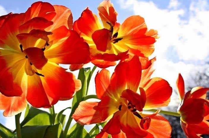 renkli renkli çiçek resimleri
