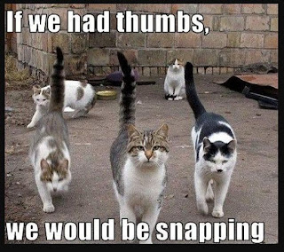Hilarious Funny Cat Memes That Will Make You LOL