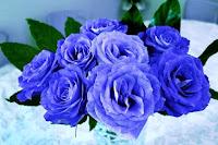 Bunga Mawar Biru Paling Cantik Wallpaper_Blue Roses Flower