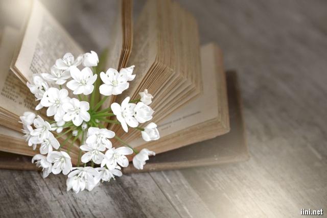 ảnh hoa trắng mọc ra từ cuốn sách