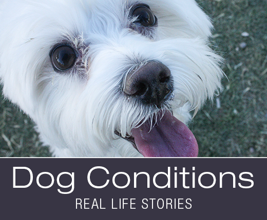Dog Conditions - Don't Give Up on Your Dog Just Because of Age: Luna's Pyometra