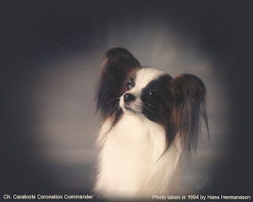 The Papillon and Phalène Breed Archive