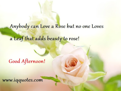 good afternoon anybody can love a rose but no one love,