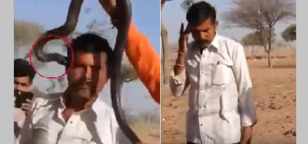 This Man Who Failed to Notice He Was Bitten by a Venomous Snake Dies Just an Hour After the Incident. Watch the Shocking Video Here!