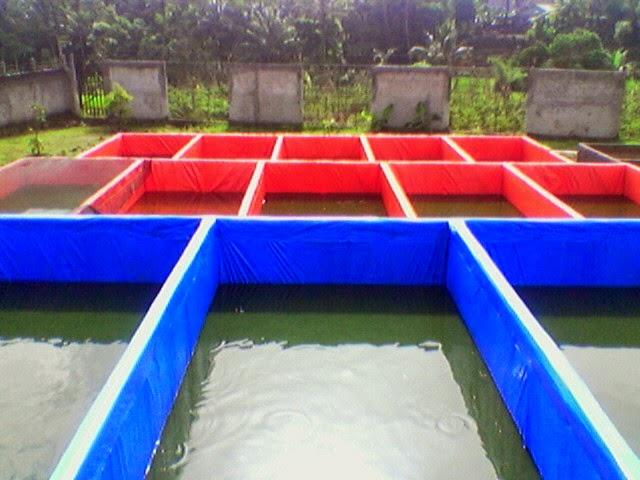 Cara Budidaya Ikan Lele di Kolam Terpal