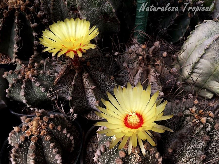 Flores de cactus de colección