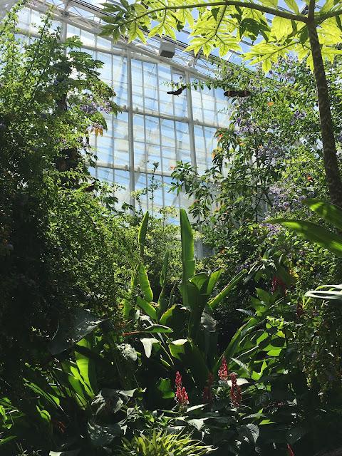 butterfly garden cleveland