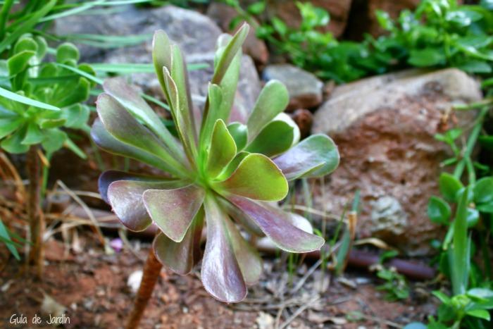 Cuidados de las plantas suculentas y cactus en el jard n - Tipos de plantas y sus cuidados ...