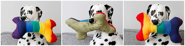 Dalmatian dog playing with a rainbow bone homemade dog toy
