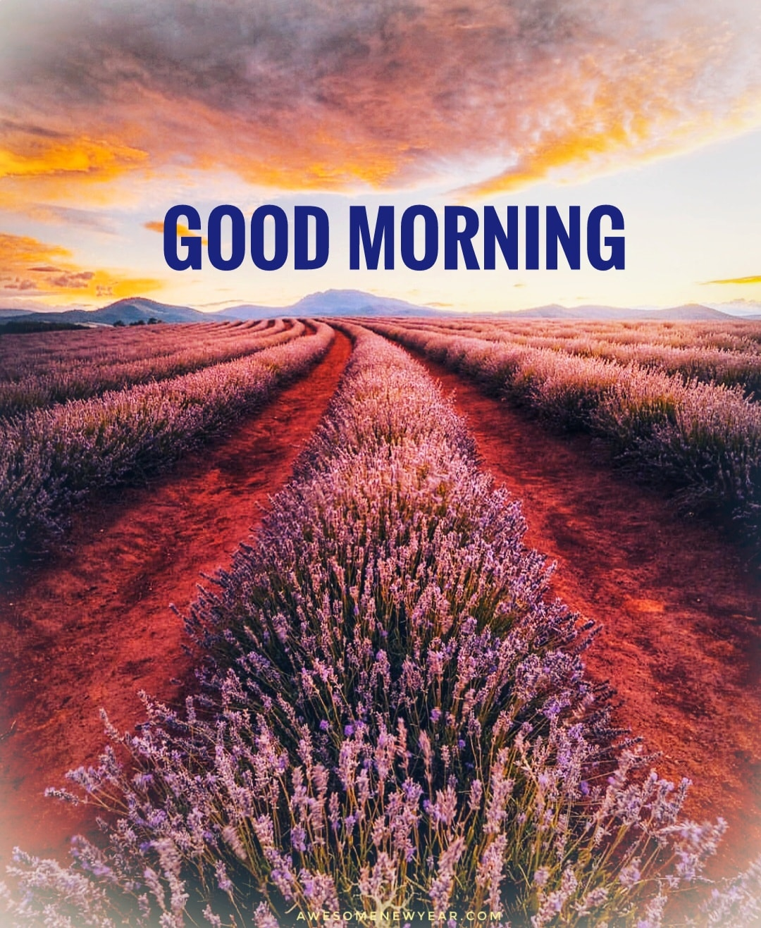 Good Morning Images Photos Wallpapers Pictures Free Download