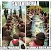 Cerita Awal Mula Pramuka di Tangerang Makan di Atas Tanah