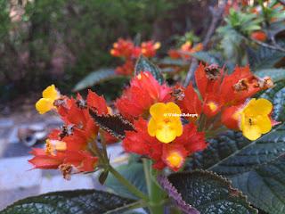 Yutopia Smaple Image Flower