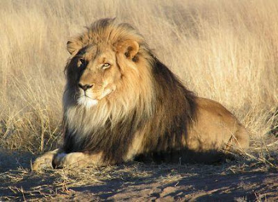 Hasil carian imej untuk singa kalah dengan arnab
