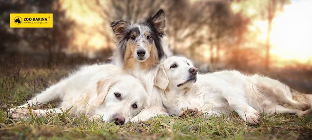 alergia u psa