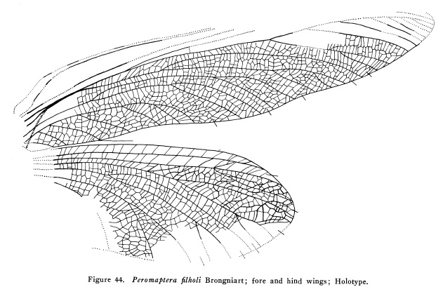 Catalogue of Organisms: June 2013