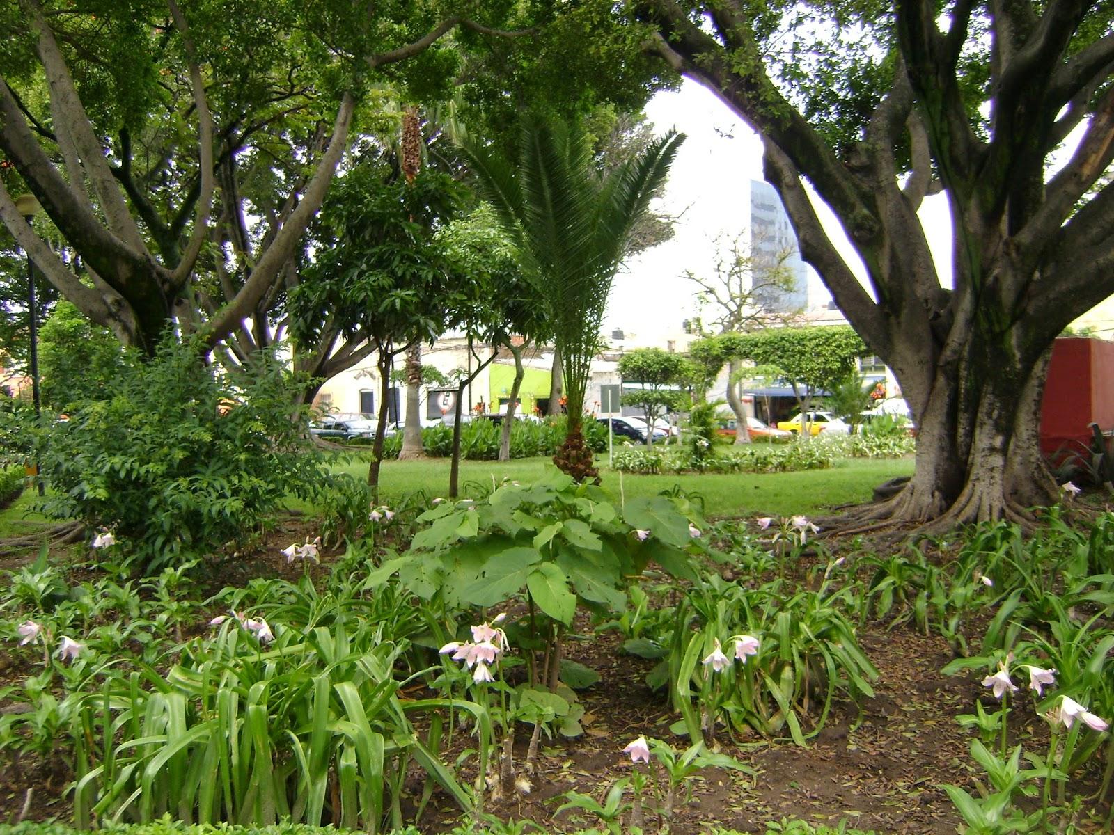 Sancarlosfortin agosto 2014 for Jardin botanico xmuch haltun