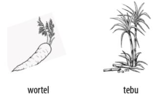 Cara perkembangbiakan tumbuhan