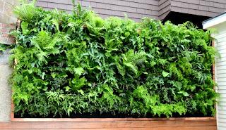Vertical Garden - Outdoor