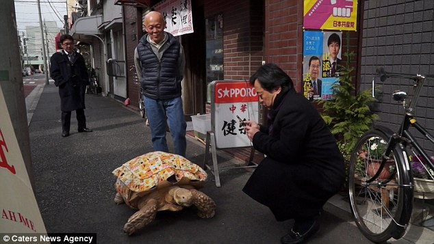Man Walks His Giant Pet Tortoise Through The Streets Of Tokyo - Man walks pet tortoise through tokyo