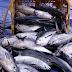Fakta sehat Tentang Ikan Untuk Kesehatan Kita