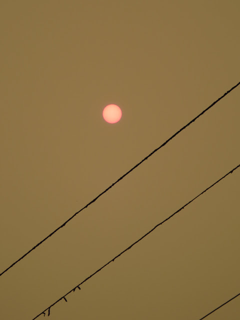 Sun Through Forest Fire Smoke