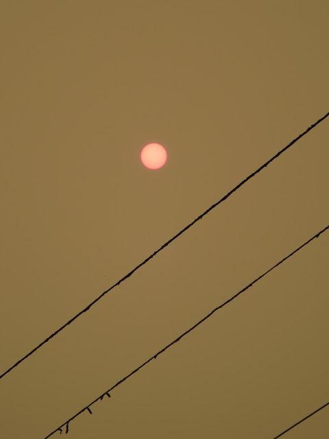 Sun Through Forest Fire Smoke