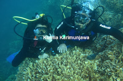 tour diving karimunjawa