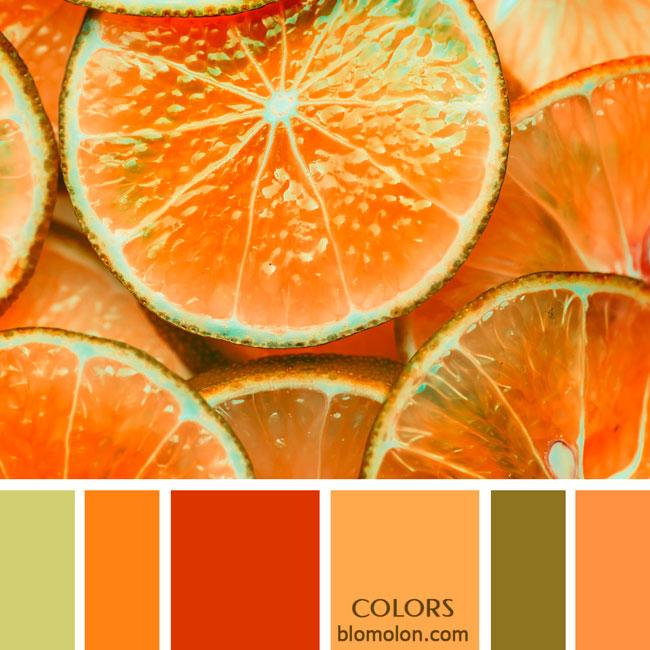 variedad_en_color_paletas_de_colores_85