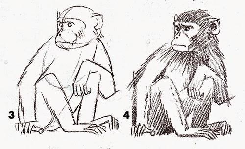 Belajar Melukis Lukisan Naturalisme Sketsa Gambar Badan Monyet