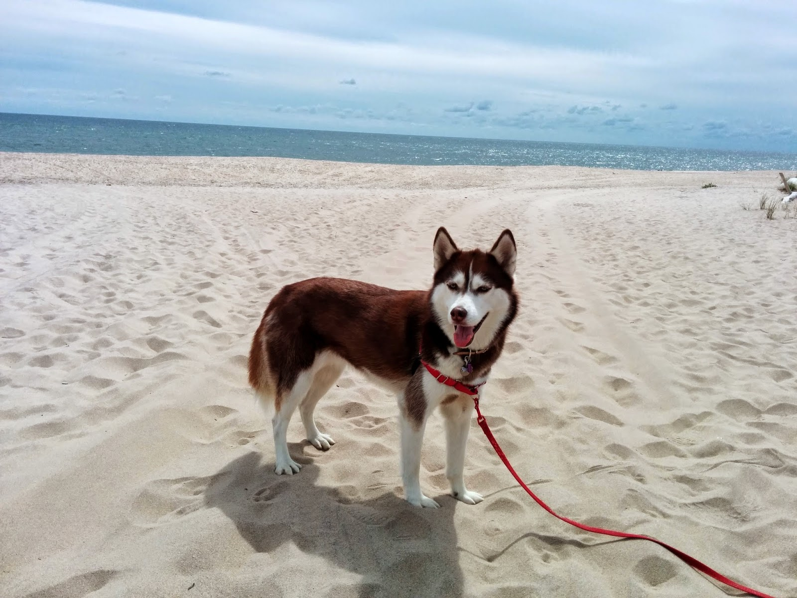 Gorgeous, pristine Road D beach in Them Hamptons, Long Island NY.  Super crowded in Summer but much less crowded and more dog friendly in early Fall.