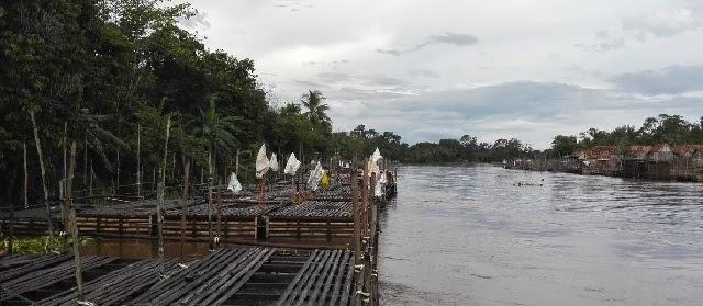 Budidaya Ikan Nila di Keramba Bambu dan Kolam Tanah Air Diam