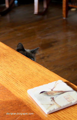 Kitten off the edge of the table, waiting to pounce
