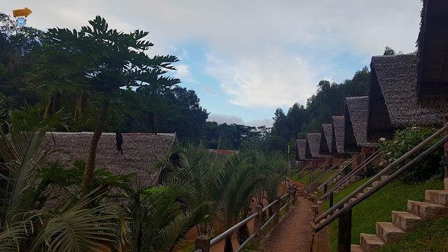 Madagascar: Feon'ny Ala Andasibe