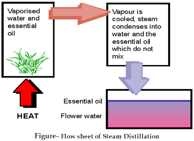 Flow diagram of steam distilatillation