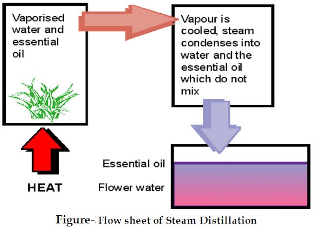 Flow diagram of steam distilatillation
