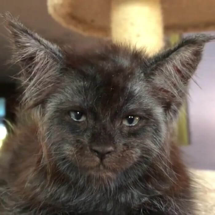 This Cat's Human-Looking Face Can't Be Unseen