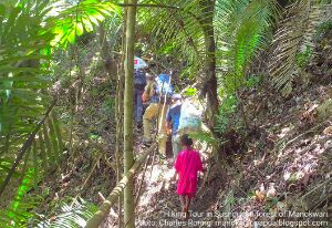 Dutch tourists were hiking in Susnguakti forest of Manokwari