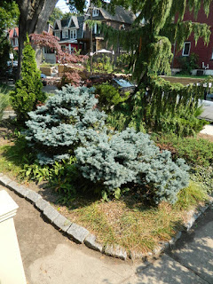 Leslieville fall cleanup after by Paul Jung Gardening Services Toronto