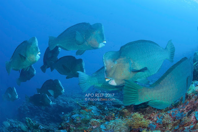 PaparazSea, Scuba Diving