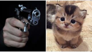 Χαλκιδική: Ηλικιωμένος άντρας πυροβόλησε εν ψυχρώ γατάκι και κλωτσούσε με καμάρι το άψυχο σώμα του