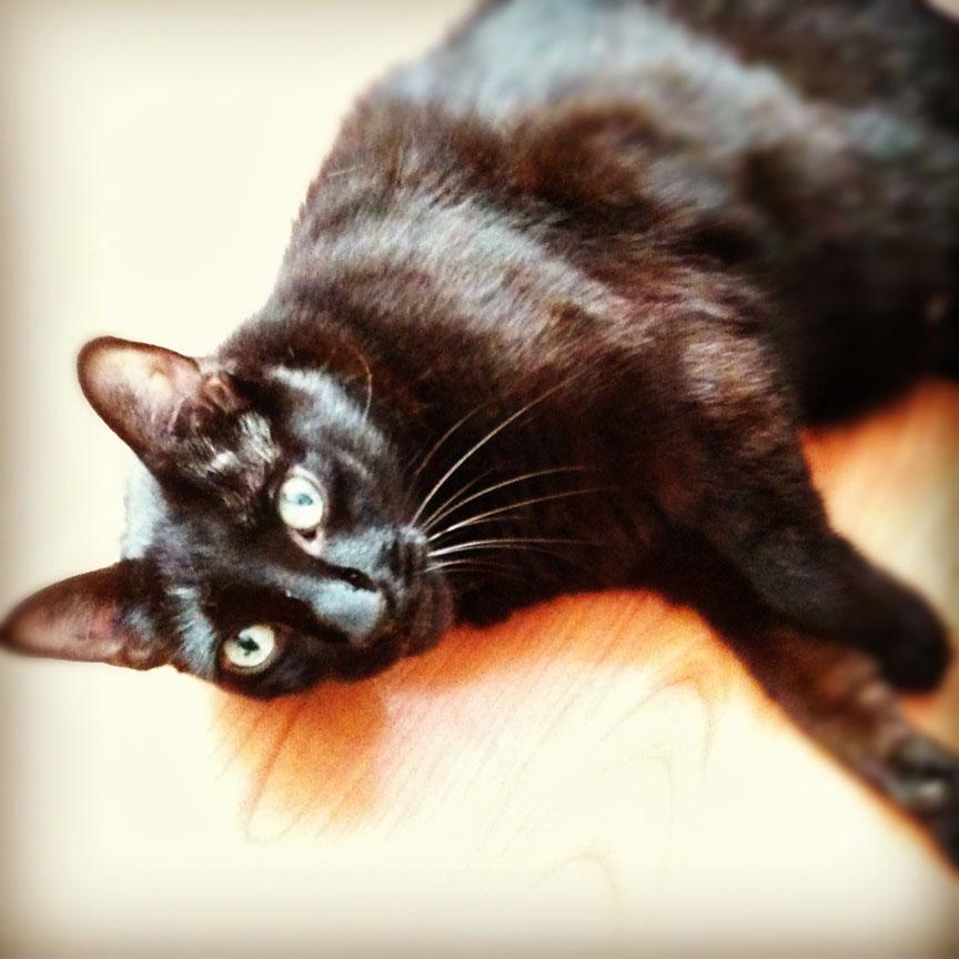 How To Wean Cats Off Wet Food