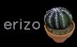 como pintar piedras con cactus