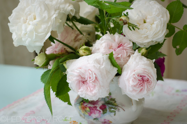 old garden roses, rose bouquet, Laurie Lewis, Hedgerow Rose