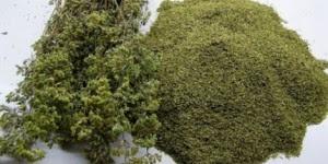 Η Ισχυρότερη Πανάκεια Της Φύσης… Φυτρώνει Στη Χώρα Μας!